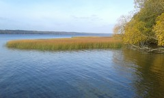 Herbst am TollenseSee