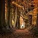 Strolling along the magic corridor of Autumn by B℮n