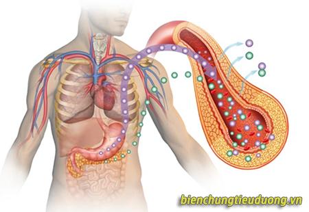 Insulin được sản xuất ở tuyến tụy và được đổ vào máu để chuyển hóa glucose