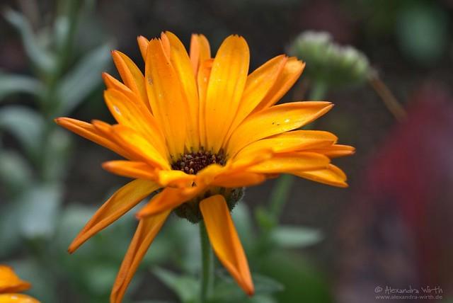 Blüte (4)