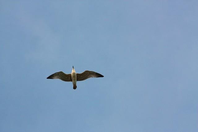 [333/365] Free birds fly