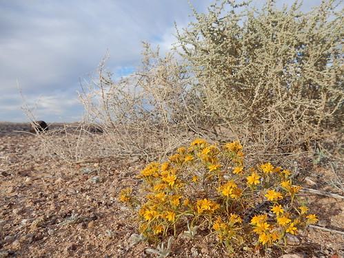 Painted Rocks Petroglyph Site - bloemen in de woestijn