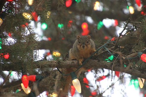 Squirrels Outside the Michigan State Capitol (Lansing, Michigan) - December 7, 2015