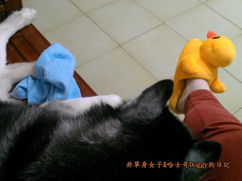 doggy黃色小鴨鞋11