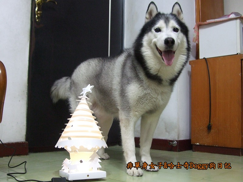 Doggy與紙箱王聖誕樹造型燈飾組07