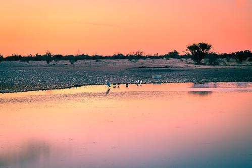 africa morning mariental sunrise travel namibia dawn waterhole lapalangegamelodge birds ambiance canon hardapregion na