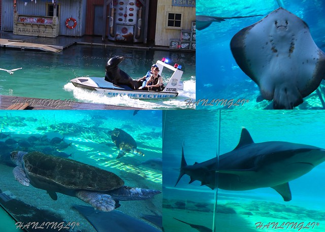 sea world07