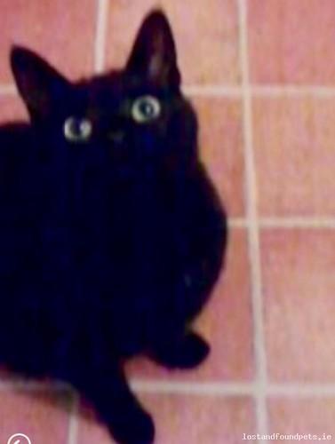 [Updated] Sun, Jan 1st, 2017 Lost Female Cat - Moneen Rinshinna, Castlebar, Mayo
