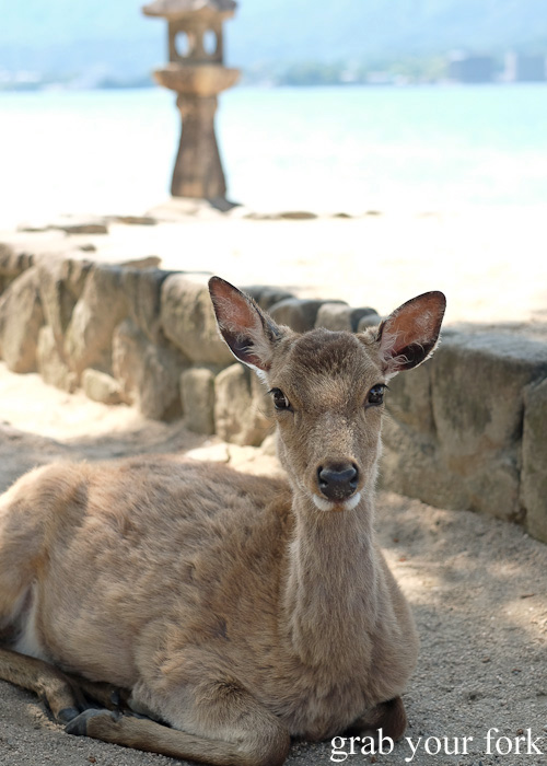 Placid deer on Miyajima Island