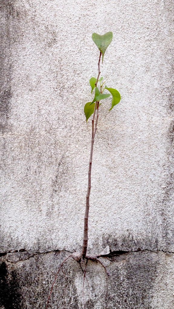 Vegetation growing out of a structure.