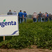 Syngenta Field Day