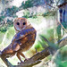 Barn Owl - 2M2K15-566 by Thy Photography