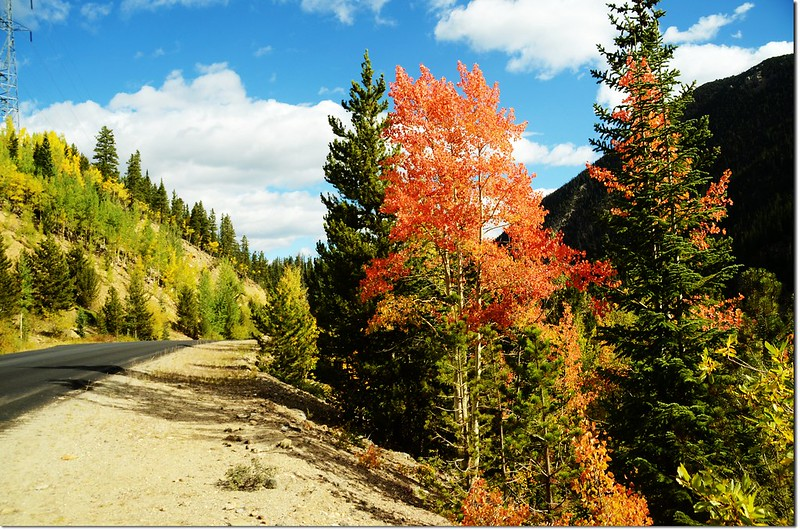 Fall colors at Guanella Pass, Colorado (7)