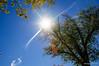 Sun Starburst - Washington DC