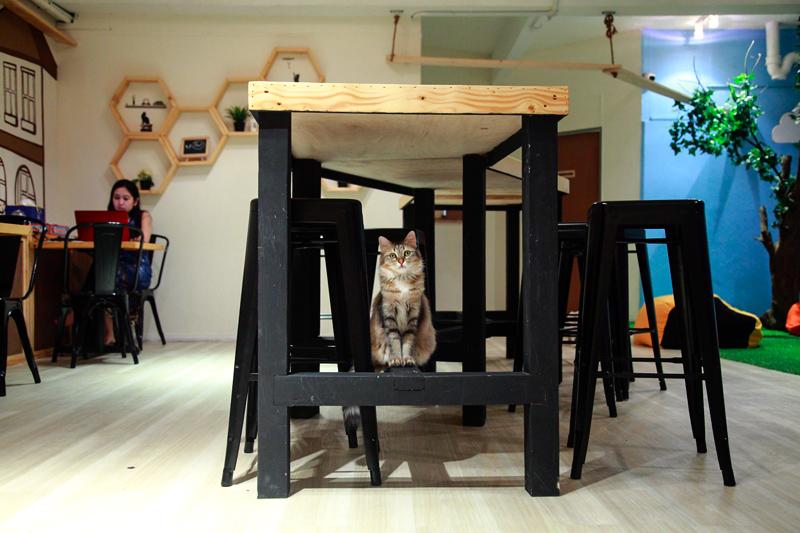 TTDI Purradise Cat Cafe Cat
