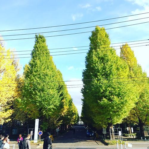 慶応大学 日吉キャンパス