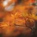 Ode to Autumn by Tammy Schild
