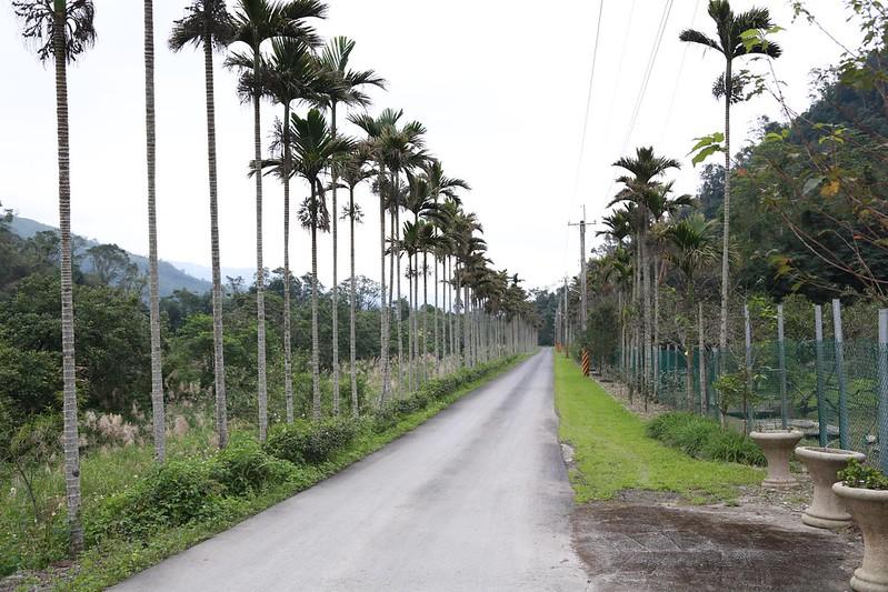 通往營地的道路
