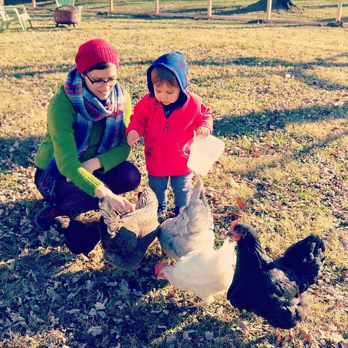 Warm December chicken petting.