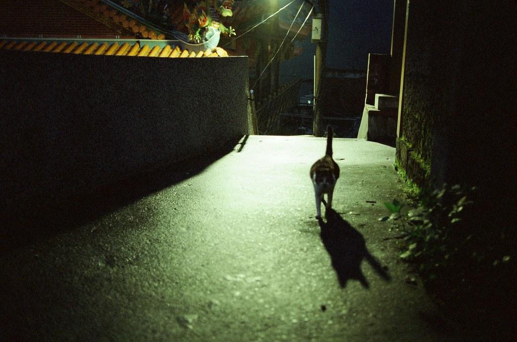 九份 KODAK 500T 5219 V3 2015/11/14 待到晚上的九份,一路上看到一些很可愛的阿貓阿狗,其中有一隻超黏的肥肥貓,真的很肥,我都有點懷疑牠是真的流浪貓嗎?還有一隻很淡定的柴犬,一直站在階梯中間,每個人過去都摸摸牠。  Nikon FM2 Nikon AI AF Nikkor 35mm F/2D KODAK 500T 5219 V3 4754-0023 Photo by Toomore