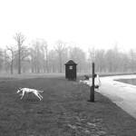 Fog-dogue