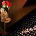 The Rose and Prada