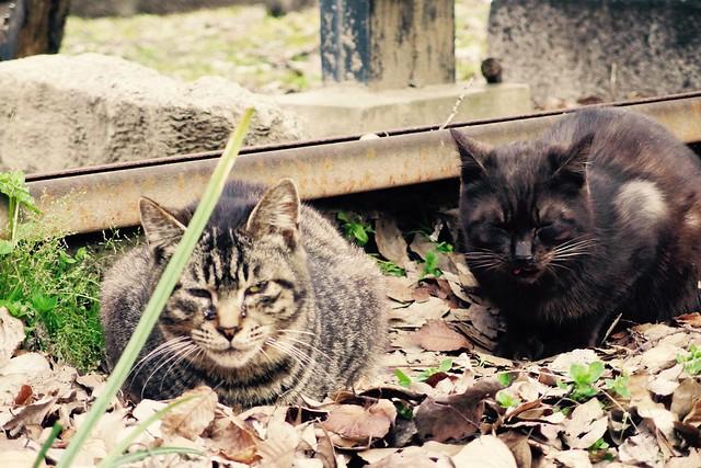 Today's Cat@2017-04-01