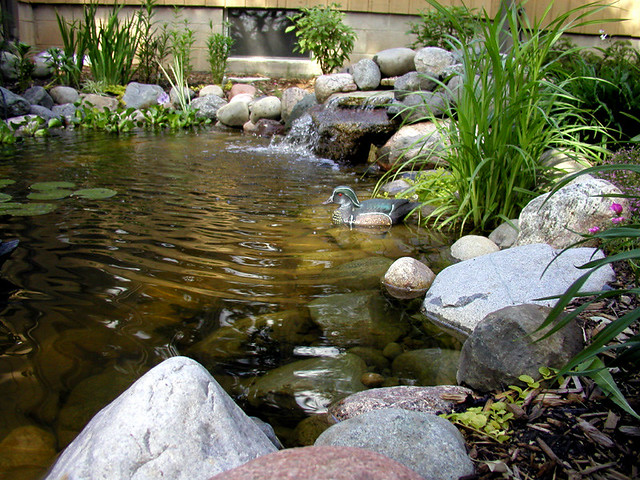 Backyard pond the little man 39 s grandmother put this for Backyard duck pond