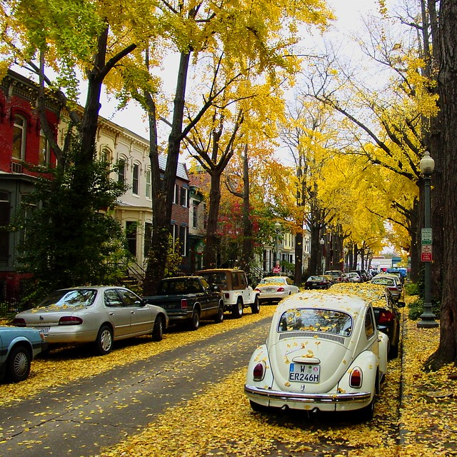 Autumn in DC from Flickr via Wylio
