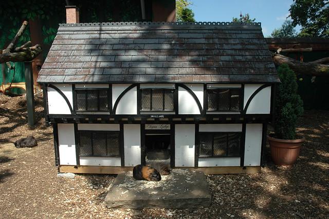 Guinea pig house explore quality bob 39 s photos on flickr for Guinea pig homes