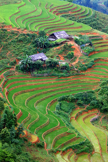 Farms and Terraced Rice in Sapa