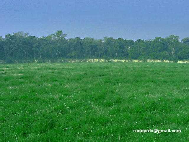 Terai Grassland | Flickr - Photo Sharing!