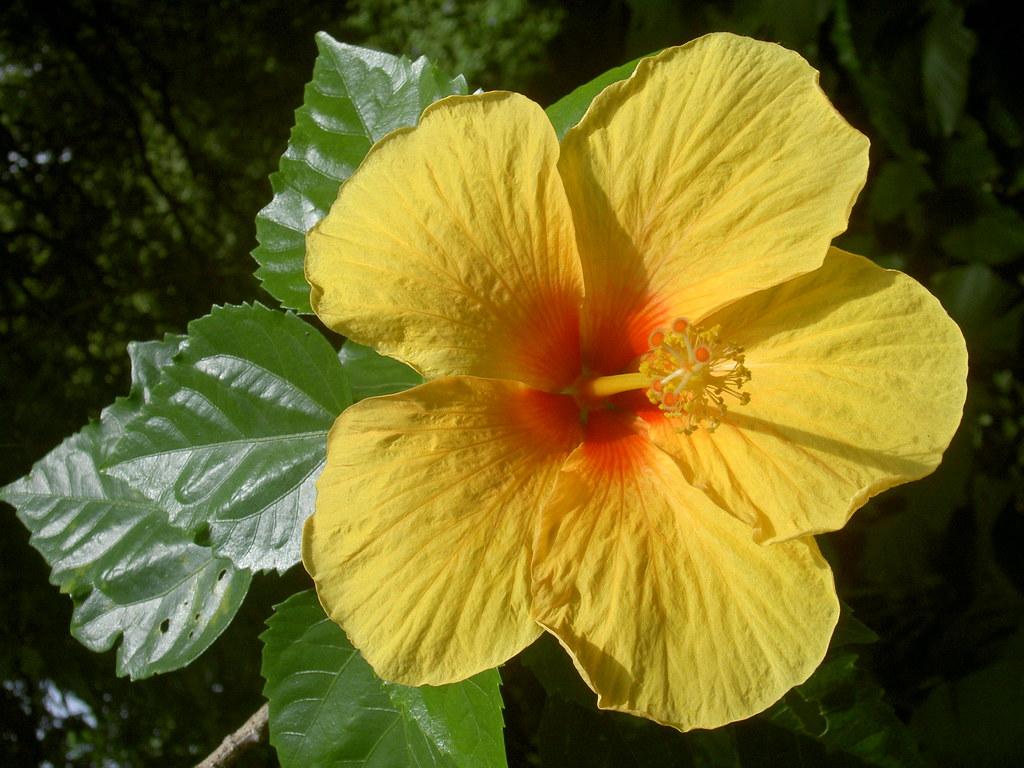Armario Ikea Pax Montaje ~ Flor de Hibisco Amarelo a photo on Flickriver
