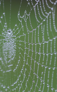 Pearls on a web