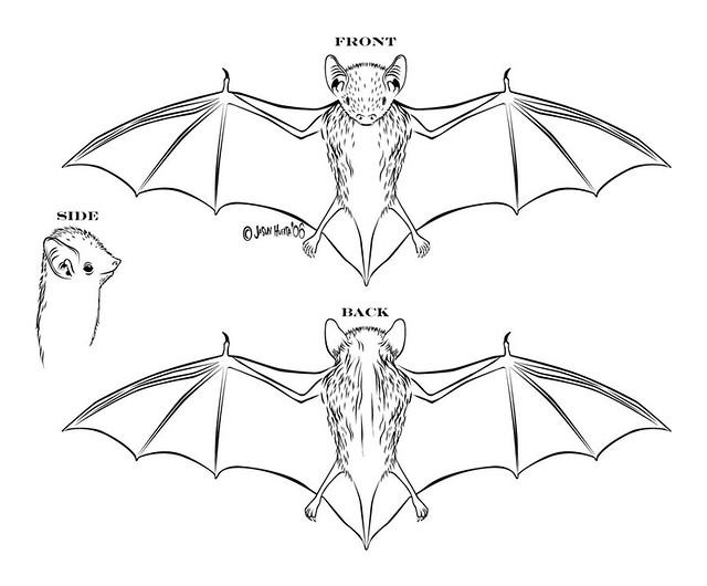 label skeleton diagram bat diagram