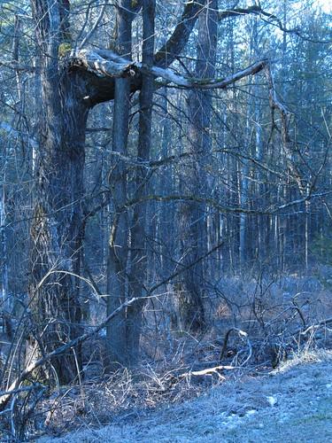 trees sunrise woods frost