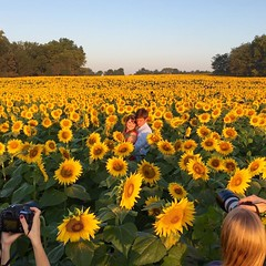 Adios KC! Had a phenomenal weekend of shoots and hanging out with friends! Topped off my trip with a fun sunrise sunflower shoot with awesome photographers! I'll see you again in December!!!