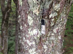 Tree Eating the Wilderness Sign