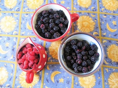 & yet more foragings... brambles and wild raspberries