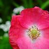 Macro Flower by fpaulo2k1