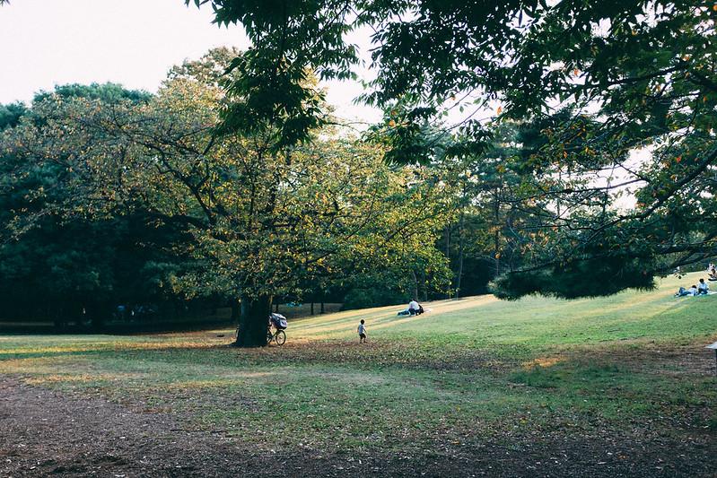 日曜の公園