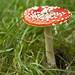 Mushroom by Jennifer van Dijk
