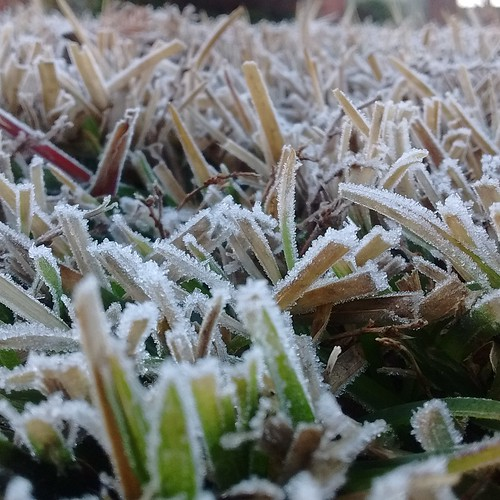 frost first