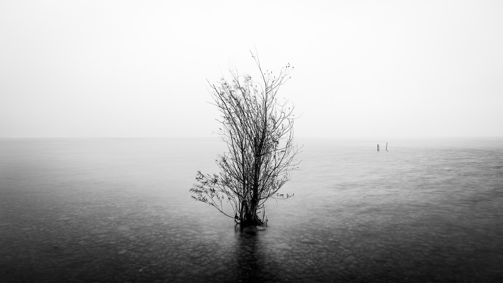 The lonely tree - Garda lake, Italy - Fine art photography
