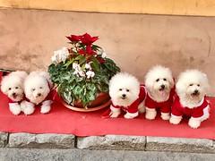 Buon Natale da Cefalù :grinning:. Merry Christmas by SIcily :heart_eyes: