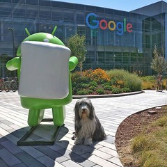 New Google Logo, new Marshmallow Android, Same old Puppy