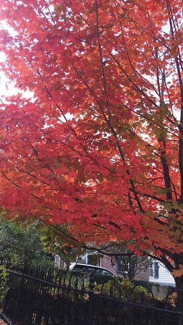 日, 2015-10-18 12:01 - Wave Hill