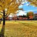 DSC_5022~3 銀杏之秋explore autumn by michaeliao27