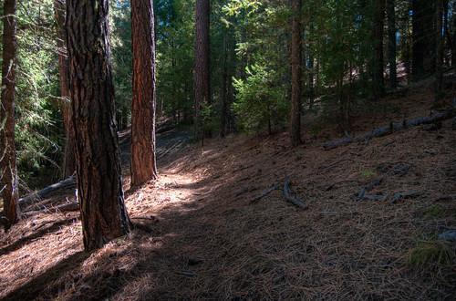 Trails: U-Bar No. 28