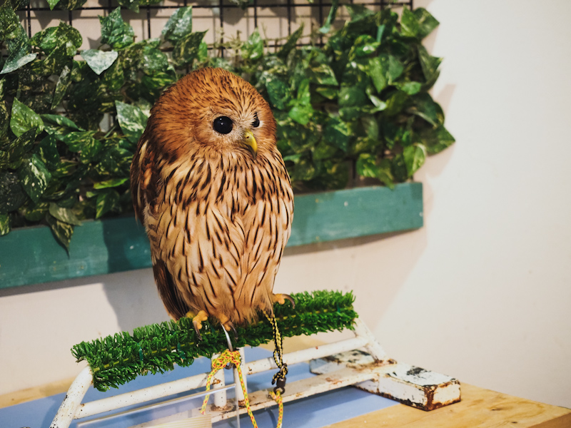 Lucky-Owl-Cafe-Osaka-6